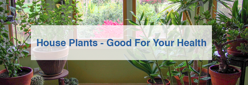 House Plants - Good For Your Health
